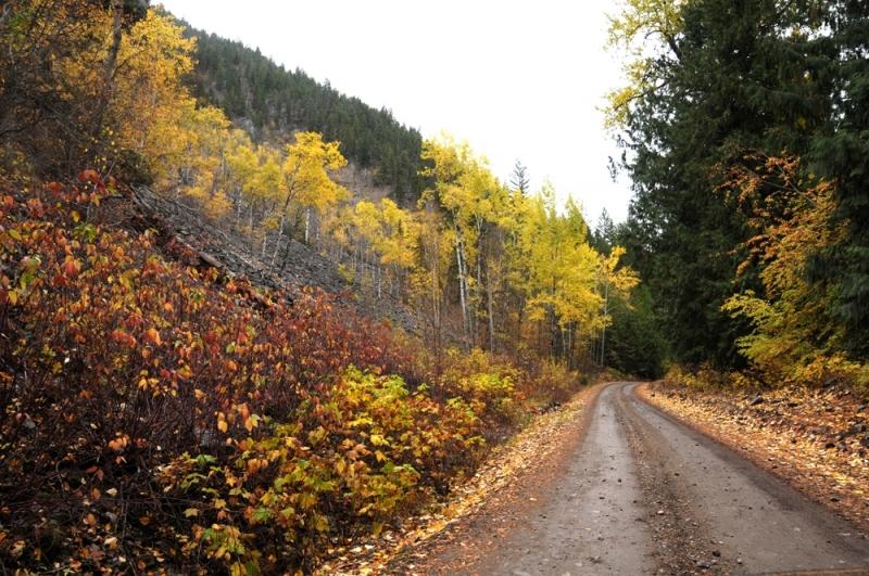 Road-in-Fall
