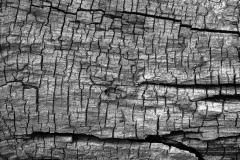 Dried-Wood