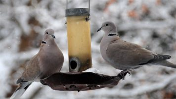 Two Turtle Doves….