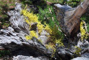 Like'n the Lichen