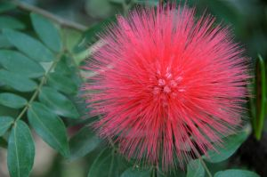 Bottle Brush.jpg
