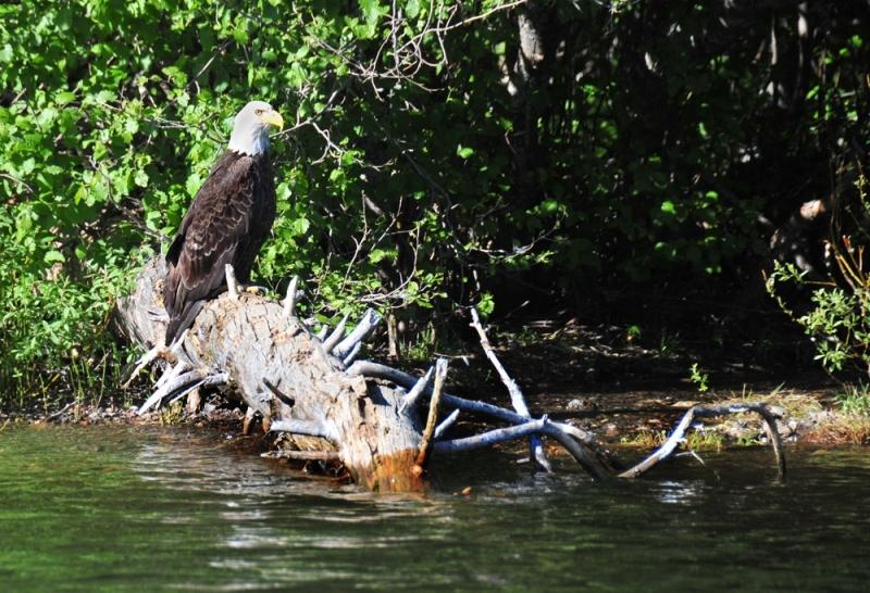 Eagle-on-Shore