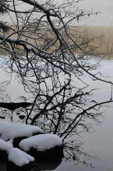 Reflection-of-Birch