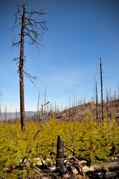 Okanagan Mountian Fire